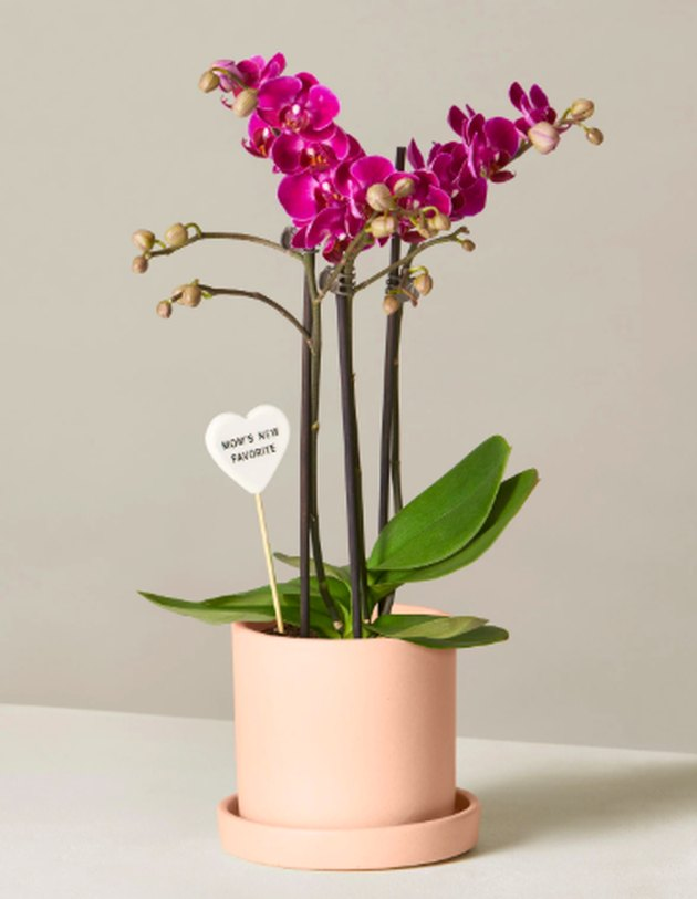 purple orchid in planter