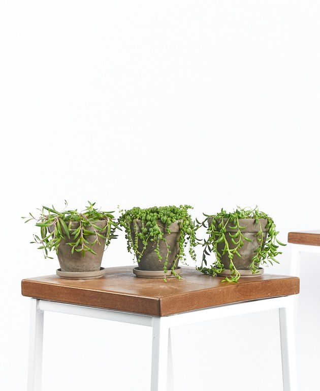 three succulents