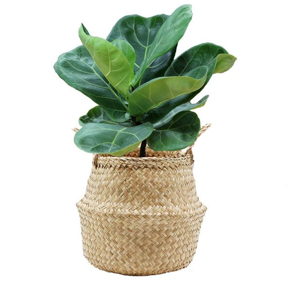 Foldable seagrass planter basket with two handles