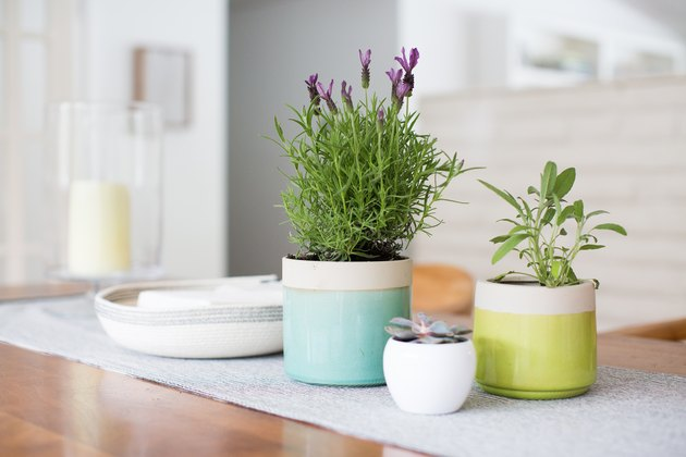 Houseplants that make you feel better