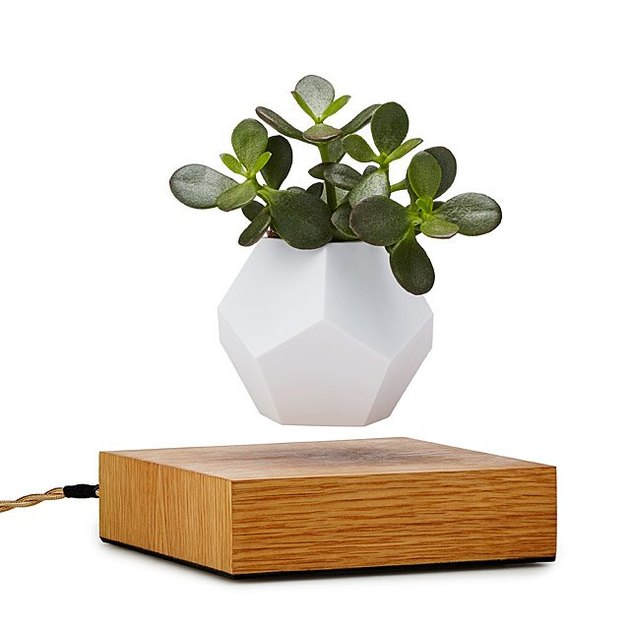 the levitating planter from uncommon goods