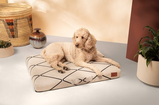 dog on black and white geometric pet bed