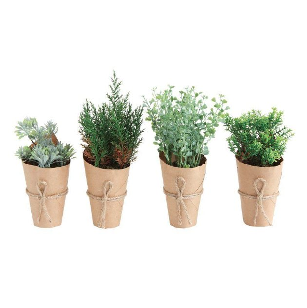 gracie oaks mini desktop plants