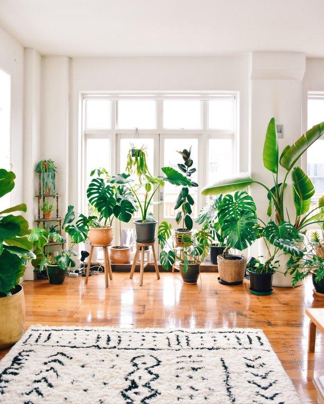 Mr. Cigar Loft living room plants