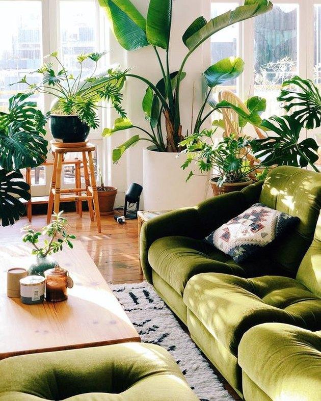 Mr. Cigar Loft living room detail of green sofa and plants