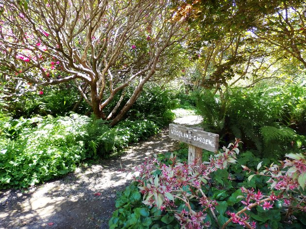 Path through woodland garden.