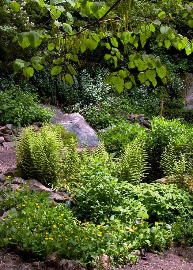 Woodland garden detail.