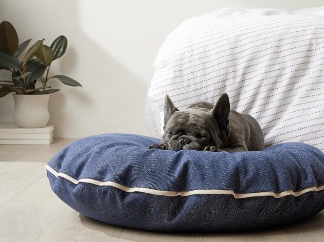 denim dog bed
