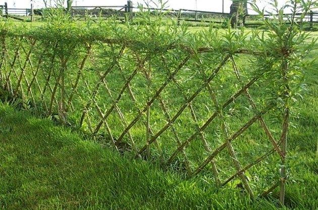 Diamond pattern willow fence.