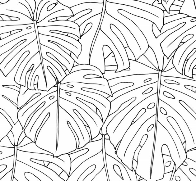 coloring book page of monstera leaves