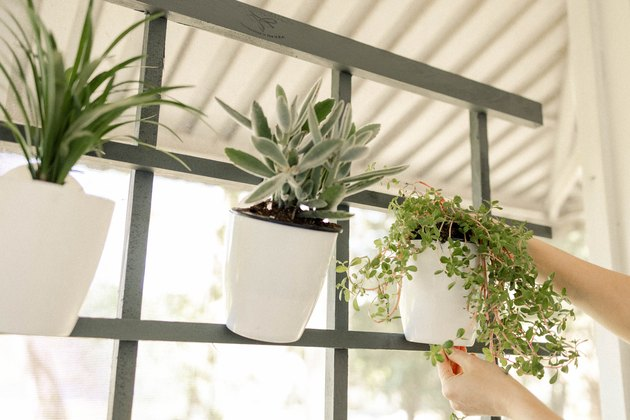 Hanging white flower pot with succulent on trellis