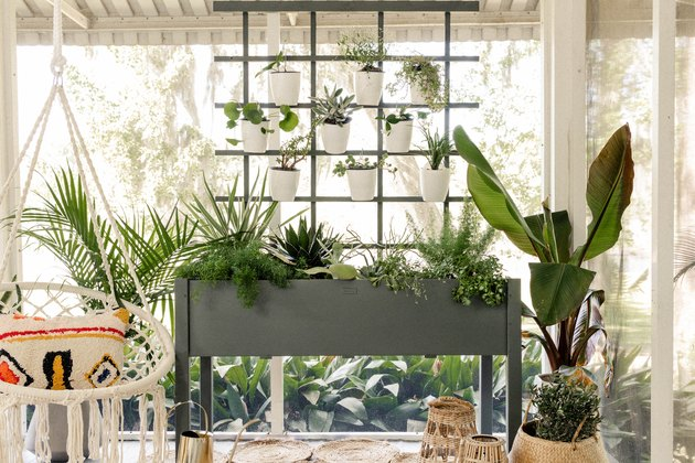 DIY living plant wall on boho patio with hammock