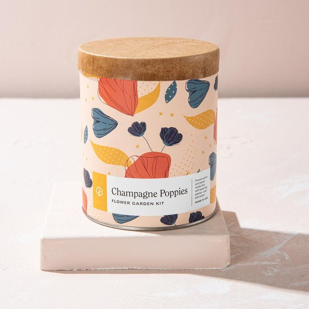champagne poppies waxed planter kit
