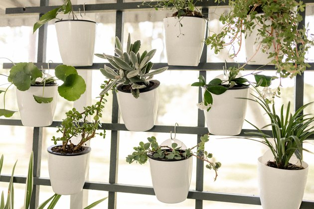 White planter pots hanging on trellis vertical garden