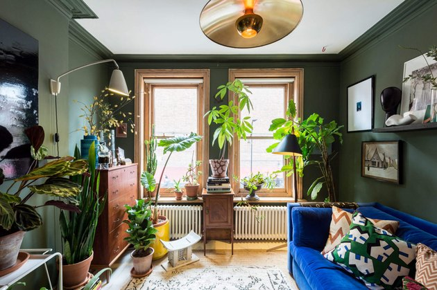 colors that go with green, bright blue sofa and yellow planter with lots of plants