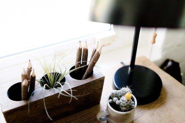 A cactus grows in a coffee mug.
