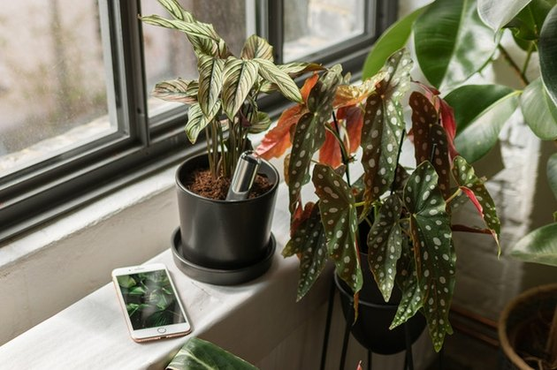 smartphone next to a plant near a window