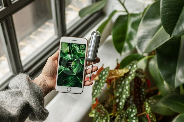 figure holding a phone and tech device near a plant