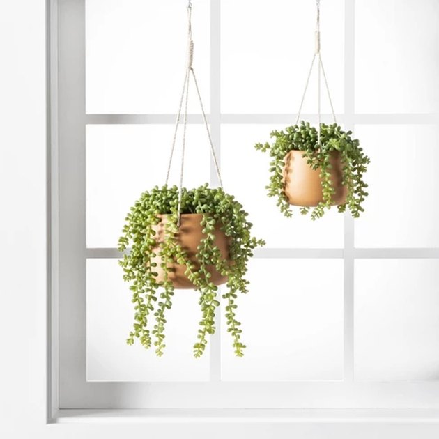 hanging plant string of pearls