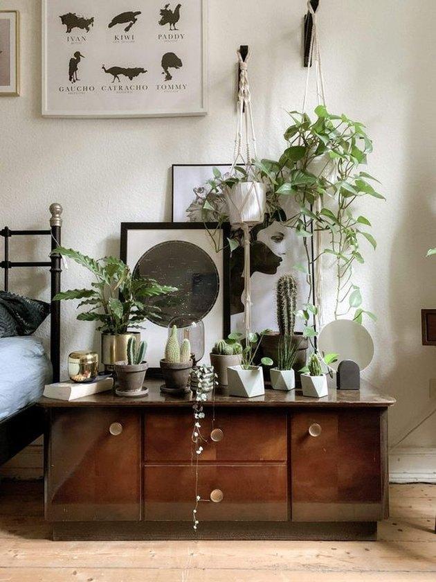 Idée de chambre à thème végétal avec petite collection de cactus