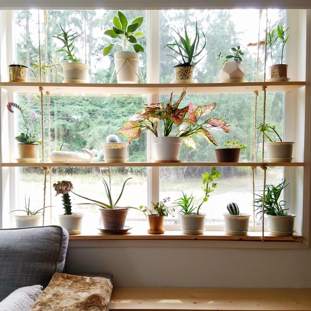 wood window plant shelves  in the living room with small potted plants