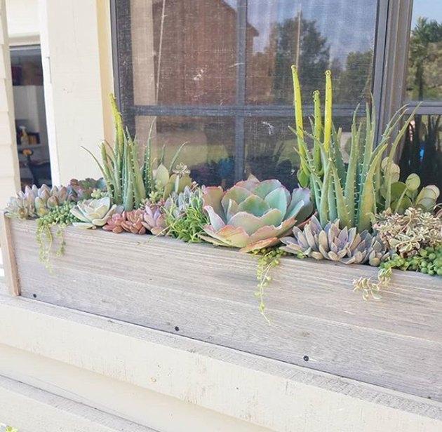 succulente boîte à fleurs fenêtre remplie