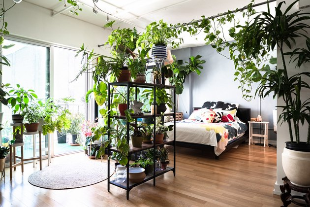 Bedroom with many plants