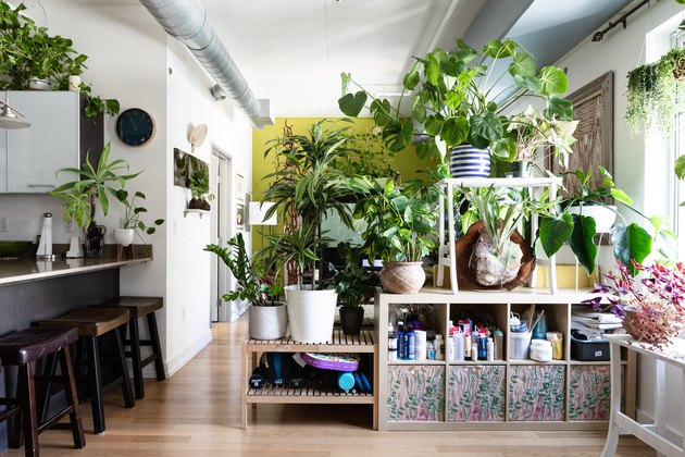 Urban jungle scene: Plants sitting on storage with hardwood floors