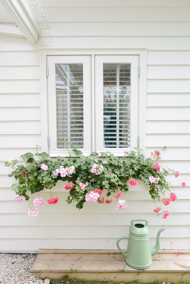 window flower box with hanging foliage against white house