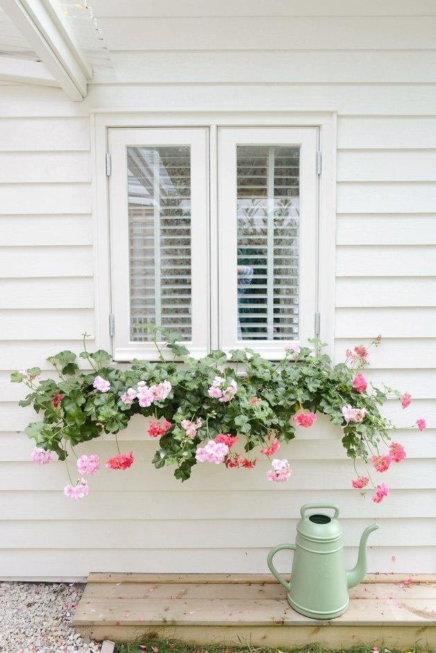 Jardinière fenêtre avec feuillage suspendu contre la maison blanche
