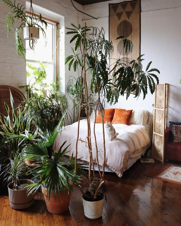 plant-themed bedroom idea with potted palms dividing space