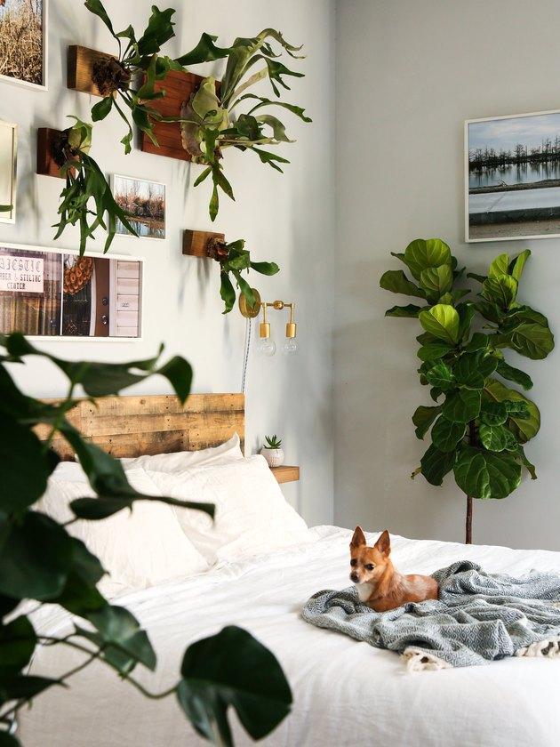 idée de chambre à thème plante artistique avec tête de lit rustique