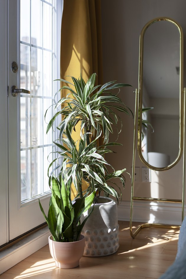 Plants by door with natural light and mirror