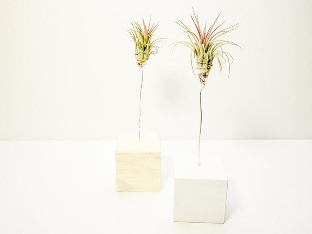 DIY wood block air plant tree