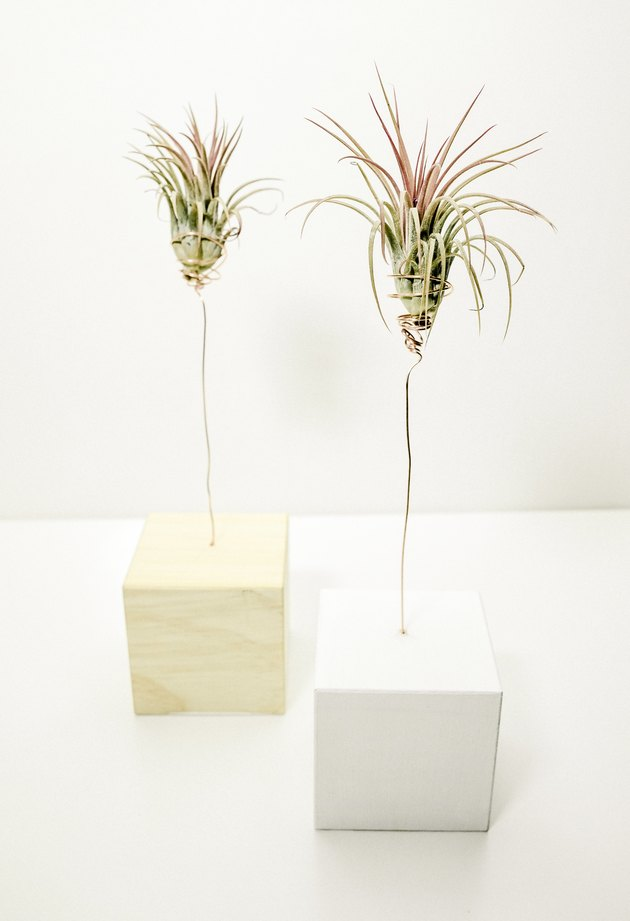 DIY wood block air plant tree