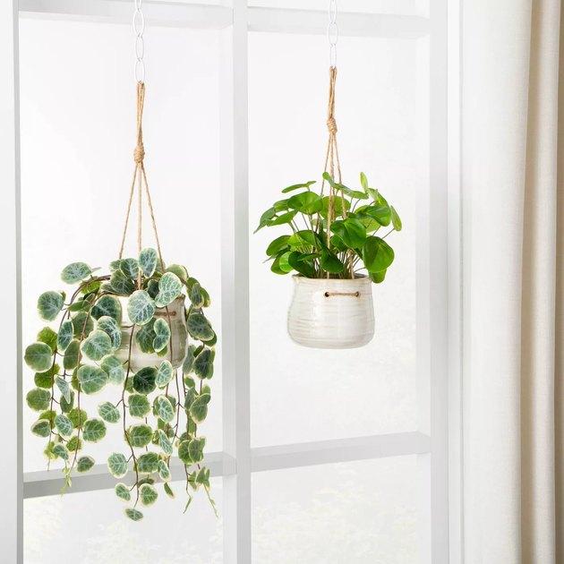 faux plants hanging on a window