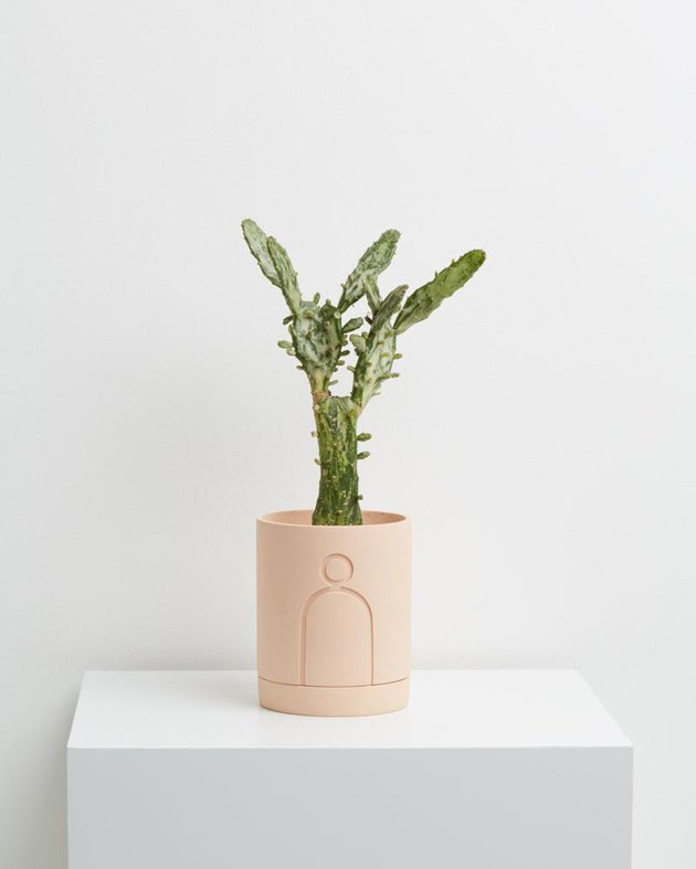 blush room decor with planter by Capra Designs