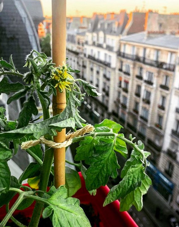 Easy Summer Vegetables to Grow on a Balcony