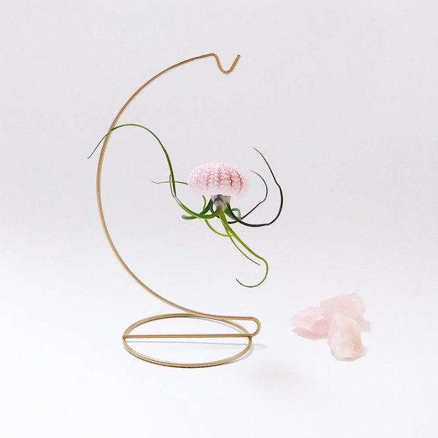 Gold plant stand with hanging light pink shell and upside-down air plant meant to look like jellyfish