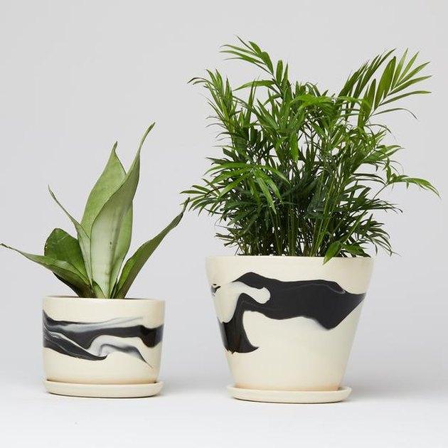helen levi planters