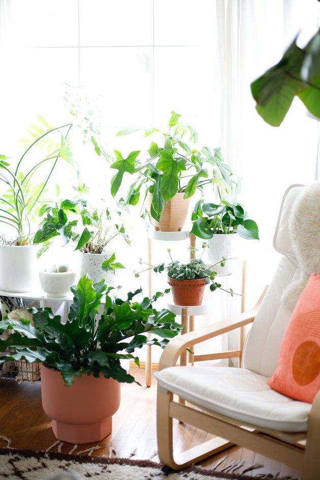 plants near chair