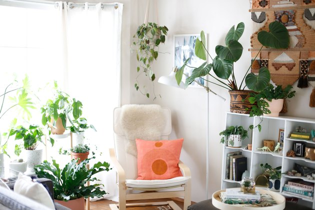 living room with shelves and plants