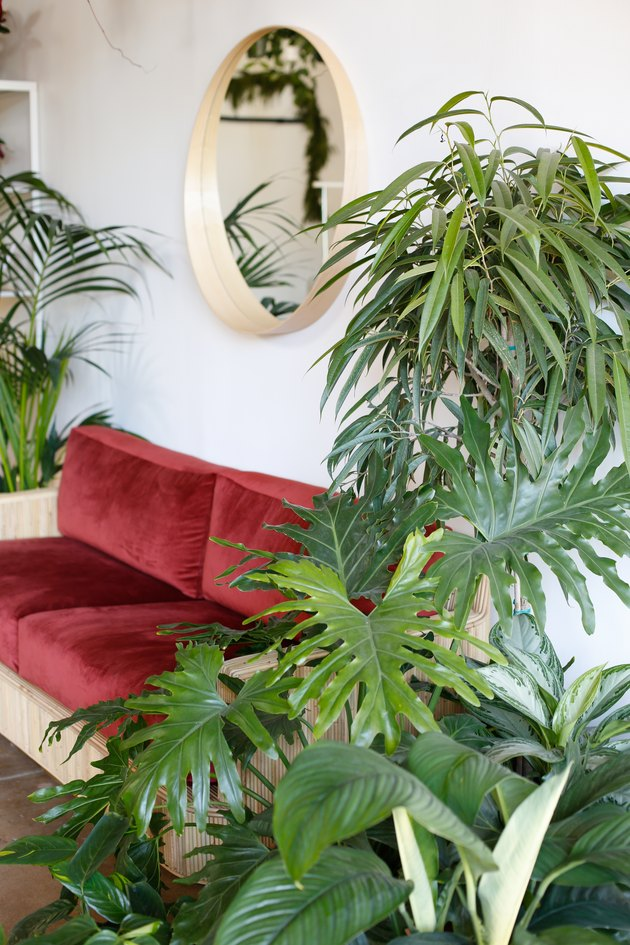 couch, mirror, and plants