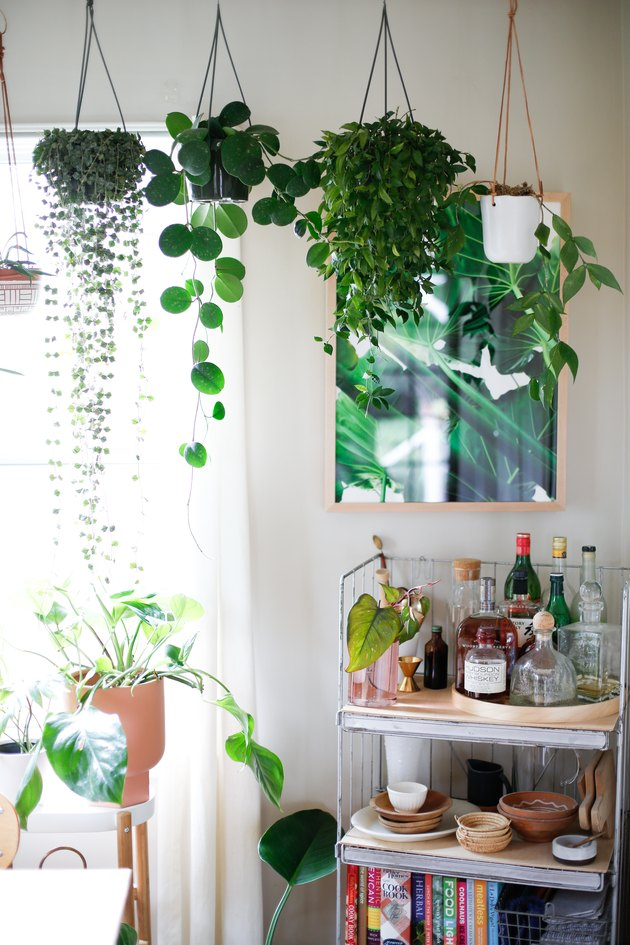hanging plants near bar cart