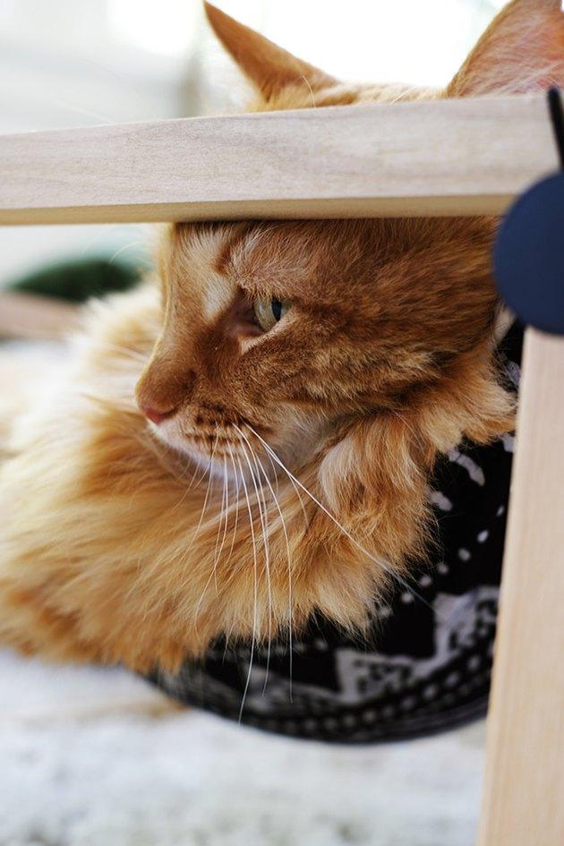 Hamac de chat