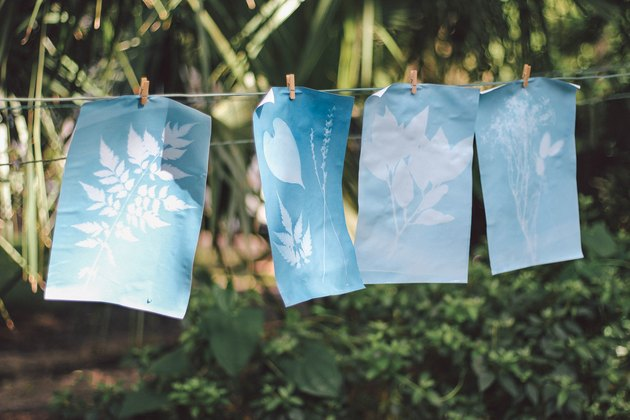 Four wet sun prints hung on clothesline with clothespins