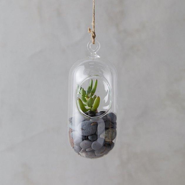 hanging oval terrarium