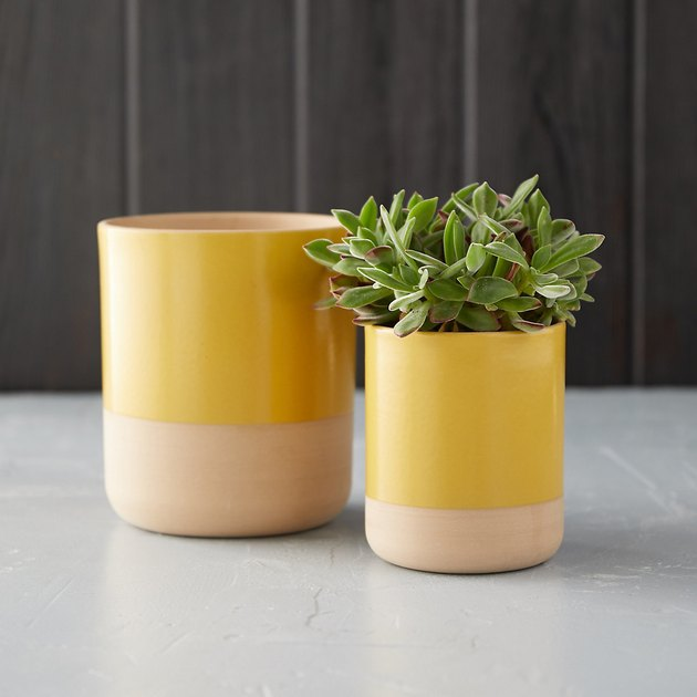 two colorblock mustard pots one with plant