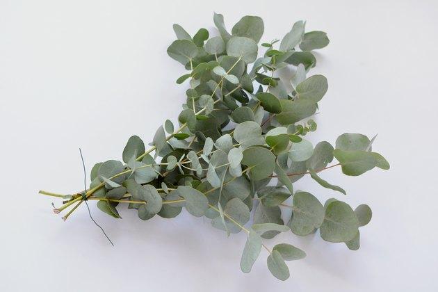 Coureur d'eucalyptus bricolage