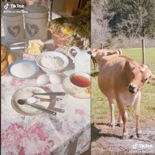 two tiktok screenshots, one showing a kitchen spread and another a couple of cows